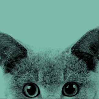 Для кошек 🐱
