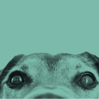 Для собак 🐶
