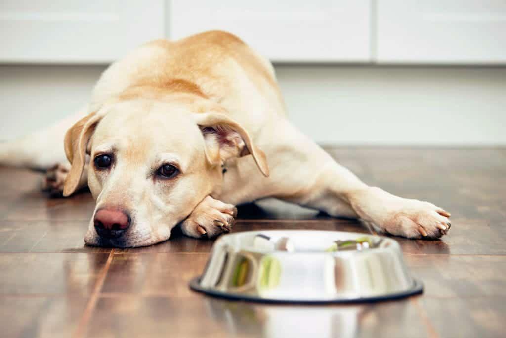 Собака не ест