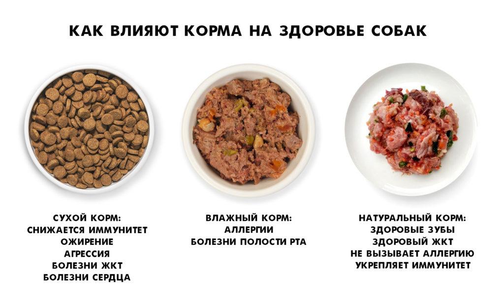 Как корма влияют на здоровье собак