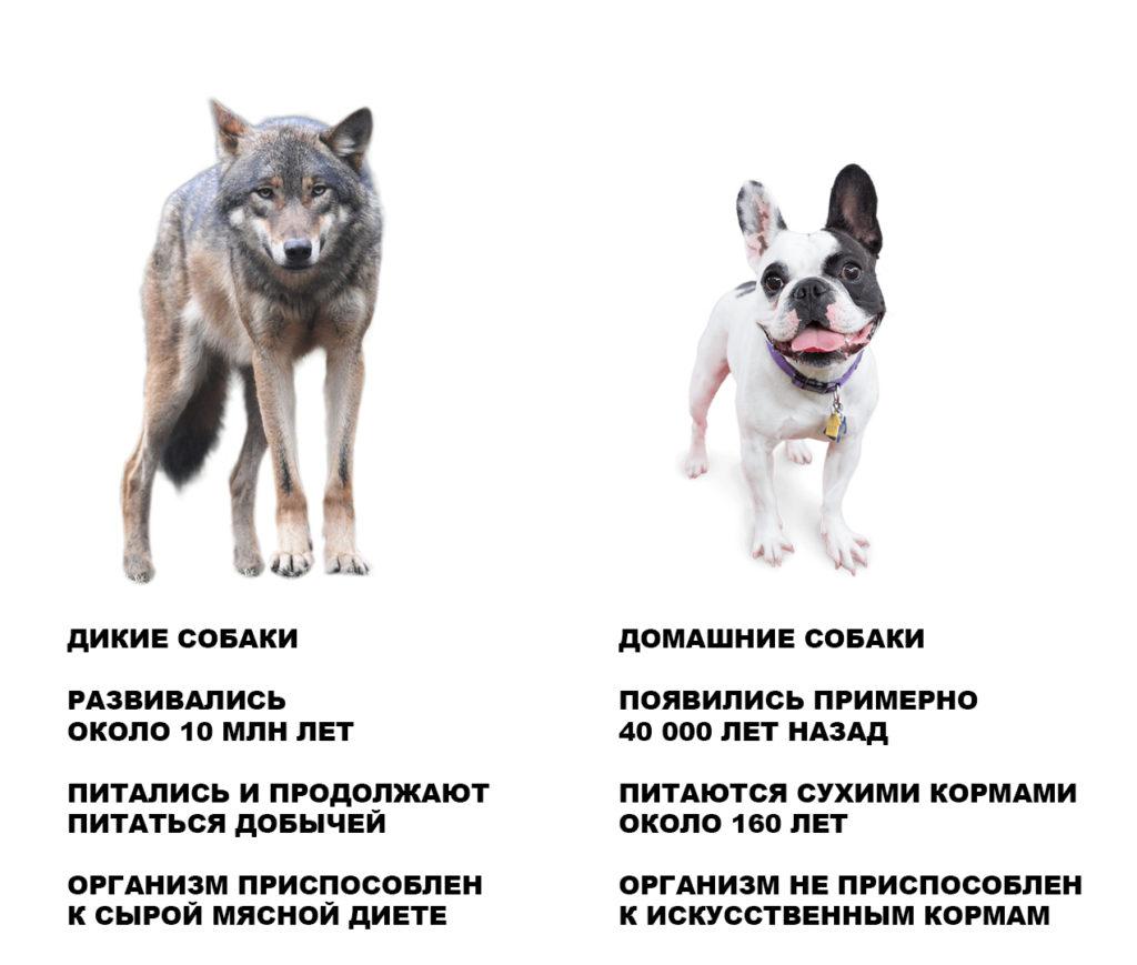 Дикие собаки развивались миллионы лет и питались сырой пищей. Домашние собаки питаются кормами всего около 160 лет.