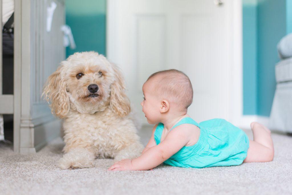 Социализированная собака нормально реагирует на маленьких детей