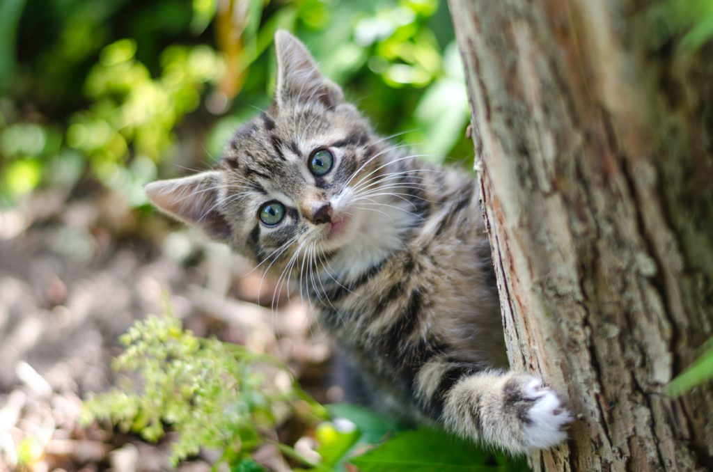 Котенок выглядывает из-за дерева